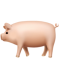 Pig on Apple iOS 12.1