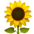 Sunflower on Apple iOS 12.1