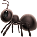 Ant on Apple iOS 12.2