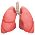 Lungs on Apple iOS 14.2