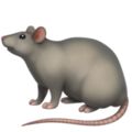 Rat on Apple iOS 14.2