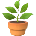 Potted Plant on Apple iOS 14.6