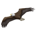 Eagle on Emojipedia 11.1
