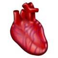 Anatomical Heart on Emojipedia 13.0