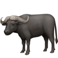 Water Buffalo on Facebook 3.0