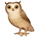 Owl on Facebook 3.1