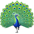 Peacock on Facebook 3.1