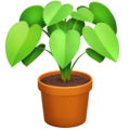 Potted Plant on Facebook 13.1