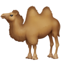 Two-Hump Camel on Facebook 13.1