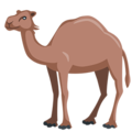 Camel on Messenger 1.0