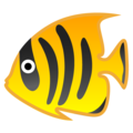 Tropical Fish on Google Android 10.0