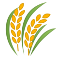 Sheaf of Rice on Google Android 11.0 December 2020 Feature Drop