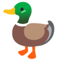 Duck on Google Android 12.0