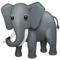 Elephant on WhatsApp 2.19.244
