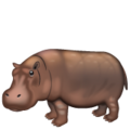 Hippopotamus on WhatsApp 2.19.244