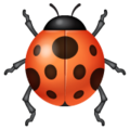 Lady Beetle on WhatsApp 2.19.244