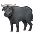 Water Buffalo on WhatsApp 2.19.244