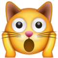 Weary Cat Face on WhatsApp 2.19.244
