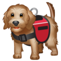 Service Dog on WhatsApp 2.20.206.24