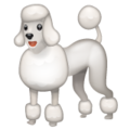 Poodle on WhatsApp 2.21.16.20