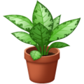 Potted Plant on WhatsApp 2.21.16.20