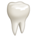 Tooth on WhatsApp 2.21.16.20