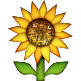Sunflower on Apple iOS 5.1