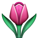 Tulip on Apple iOS 5.1