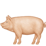 Pig on Apple iOS 6.0