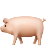 Pig on Apple iOS 13.1