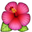 Hibiscus on Apple iOS 5.0