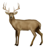 Deer on Emojipedia 11.1