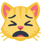 Weary Cat Face on Facebook 2.1