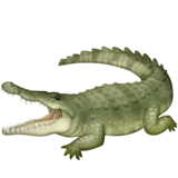 Crocodile on Facebook 3.0