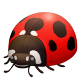 Lady Beetle on Facebook 3.0