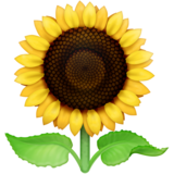 Sunflower on Facebook 3.0
