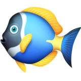 Tropical Fish on Facebook 4.0
