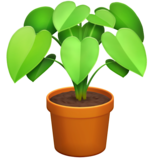 Potted Plant on Facebook 13.0