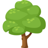 Deciduous Tree on Facebook 2.0