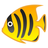 Tropical Fish on Google Android 8.0