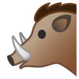 Boar on Google Android 10.0