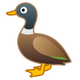 Duck on Google Android 10.0
