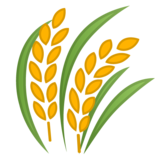 Sheaf of Rice on Google Android 10.0
