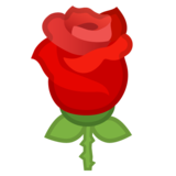 Rose on Google Android 10.0