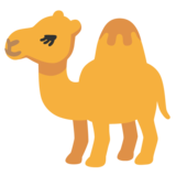 Camel on Google Android 11.0
