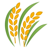 Sheaf of Rice on Google Android 11.0