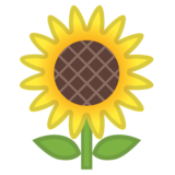 Sunflower on Google Android 11.0