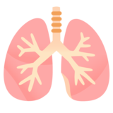 Lungs on Google Android 12.0