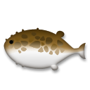 Blowfish on LG G3