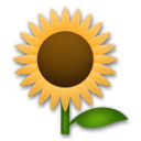 Sunflower on LG G3